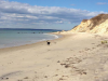 vineyard-beach-dog