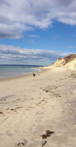 vineyard-beach-dog