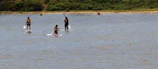 Vineyard paddleboarding